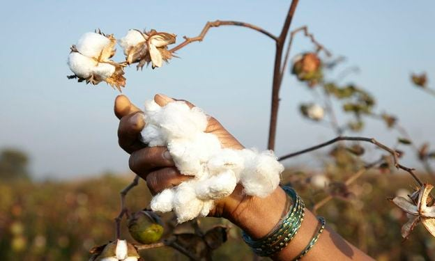our organic cotton story